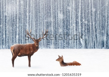 Family of noble deer in a snowy winter forest. Christmas fantasy image in blue and white color. Snowing. Winter wonderland.