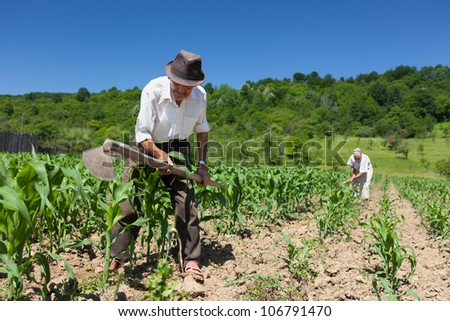 Family of rural workers weeding on the corn field with the forest in the background