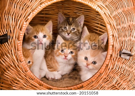 Family of six kittens in their own basket