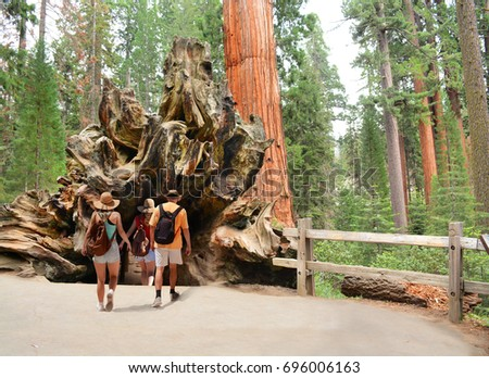 Family on hiking trip exploring sequoia trees. People walking  through the Fallen Monarch, tree, General Grant Tree Trail, Kings Canyon National Park, California, USA. in Kings Canyon National Park