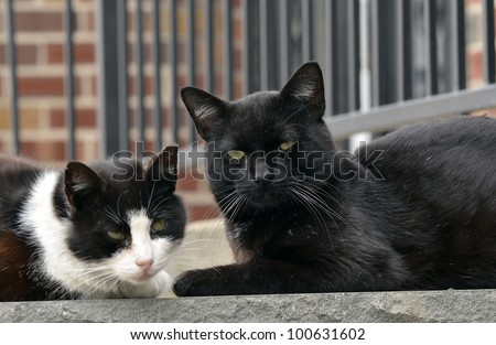 family Portrait of a black cat and his mom - stock photo