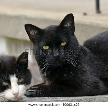 family Portrait of a black cat and his mom