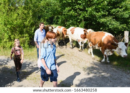Family walking along country path with cattle