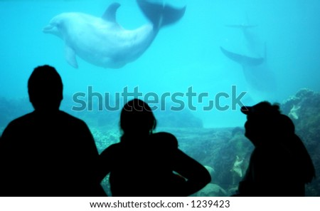 family watching dolphins