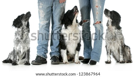 family with dogs - husband and wife with three dogs isolated on white background