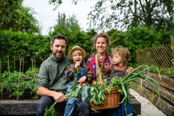 Family with small children gardening on farm, growing organic vegetables.