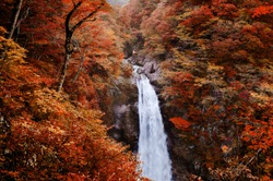 Famous Akiu Waterfall in Akiu Osen with vibrant red autumn forest, Sendai - Japan