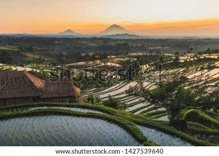 Famous Bali landmark Jatiluwih rice terraces. Beautiful sunrise view of green hills and mount Agung on horizon. Wanderlust concept and nature background. #1427539640