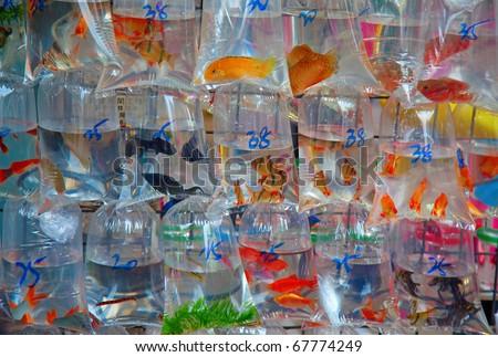 """Famous """"Fish market"""" in Hong Kong, China - stock photo"""