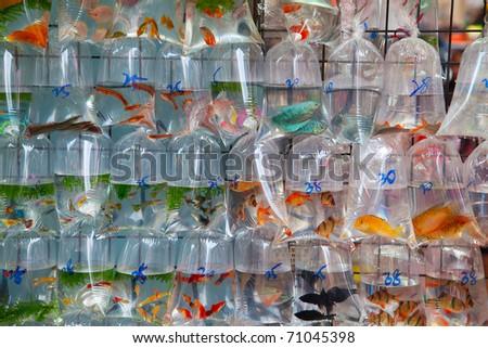 """Famous """"Goldfish market"""" in Hong Kong, China"""
