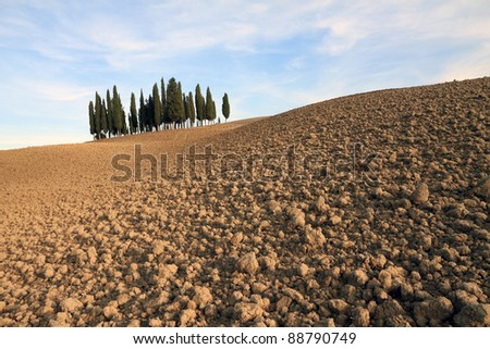 famous group  of mediterranean  cypresses, between San Quirico d Orcia and Montalcino in  Tuscany, Italy