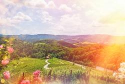 Famous Heart shaped wine road in Slovenia - Austria in summer, Heart form - Herzerl Strasse, vineyards in summer, Spicnik tourist spot