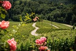 Famous Heart shaped wine road in Slovenia in summer, Heart form - Herzerl Strasse, vineyards in summer, Spicnik