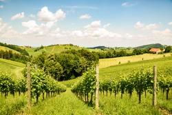 Famous Heart shaped wine road in Slovenia in summer, Herzerl Strasse, vineyards in summer, Spicnik tourist spot