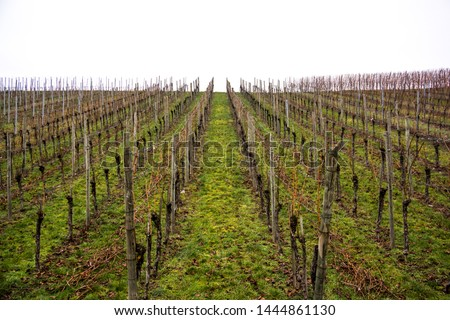 famous landmarks in south west germany vineyard hill in winter grapevines growing in line #1444861130