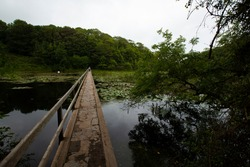 Famous lily ponds of Bosherton, Wales. A narrow bridge with wooden railing on one side goes over the pond with dark water and patches of water lilies. Hiking trail goes into the woods.