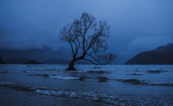 Famous moody Wanaka Tree surrounded by lake water and mountainous landscape located in the South of New Zealand