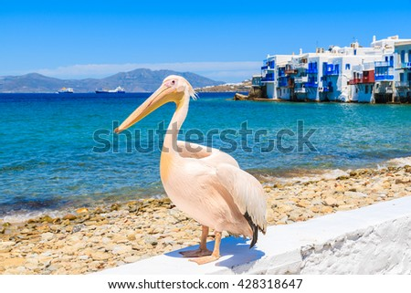 Famous pelican bird posing for photos against beach in Mykonos town, Cyclades islands, Greece
