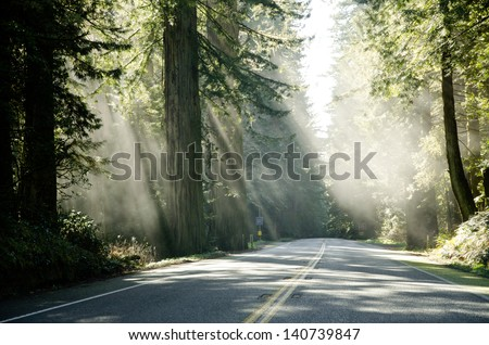 Famous Redwood trees on the Pacific Coast lit by the sun - stock photo