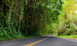 Famous Road to Hana fraught with narrow one-lane bridges, hairpin turns and incredible island views, curvy coastal road with views of cliffs, beaches,waterfalls, and miles of rainforest. Maui, Hawaii