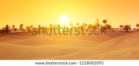 Famous sand dunes in Gran Canaria