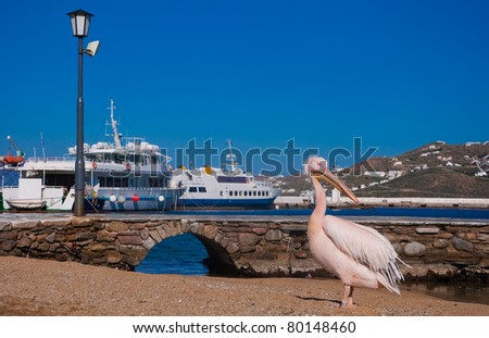 famous symbol of the island of Mykonos in Greece - a pelican