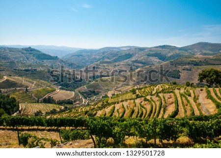 Famous vineyards in Douro Valley, Portugal #1329501728