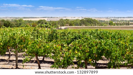 Famous wine region the Barossa Valley near Adelaide, South Australia