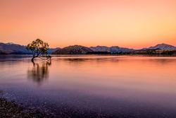 Famouse beautiful famous Wanaka tree in sunset and twilight colours, Lake Wanaka, South Island, New Zealand