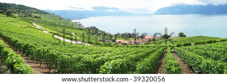Famouse vineyards in Lavaux region against Geneva lake. Switzerland