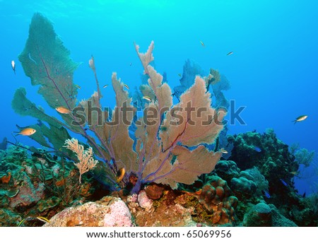 Fan coral, a natural habitat for reef life.
