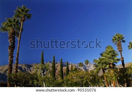 Fan Palms Trees washingtonia filifera Mountains Palm Springs California