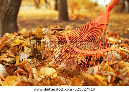 Fan rake and pile of fallen leaves in autumn park, close up view Stock photo ©