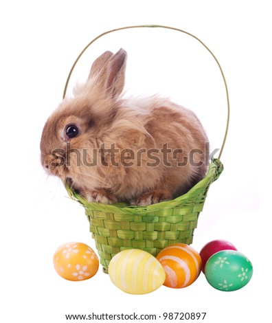fancy rabbit in the basket and easter egss isolated on white