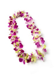 Fancy single strand Hawaii fresh orchid flowers lei necklace mix color blue and green from Thailand isolate on white background.