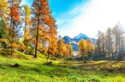 Fantastic autumn scene in Swiss Alps near Maloja  village. Colorful autumn scene of Swiss Alps. Location: Maloya, Engadine region, Grisons canton, Switzerland, Europe.