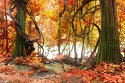 fantastic autumn tree, deep forest ,Beautiful brown colored foggy forest trees with forest road.