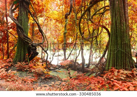 fantastic autumn tree, deep forest ,Beautiful brown colored foggy forest trees with forest road. #330485036