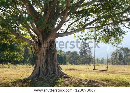 fantastic big tree with swing on green field, Chiang Mai, Thailand