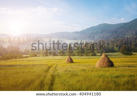Fantastic day with fresh blooming hills in warm sunlight. Dramatic and picturesque morning scene. Location place: Carpathian, Ukraine, Europe. Artistic picture. Beauty world. Soft filter effect. #404941180
