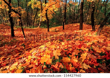 Fantastic fall landscape with bright red leaves on the ground and trees