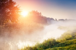 Fantastic foggy river with fresh green grass in the sunlight. Sun beams through tree. Dramatic colorful scenery. Seret river, Ternopil. Ukraine, Europe. Beauty world.
