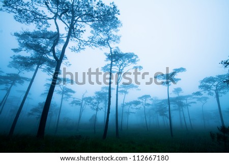 Fantastic forest with mist