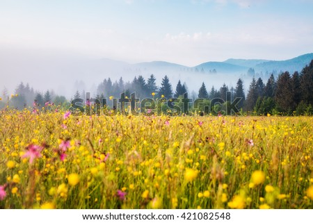 Fantastic green hills glowing by warm sunlight at twilight. Dramatic and picturesque morning scene. Location place: Carpathian, Ukraine, Europe. Artistic picture. Beauty world. Soft filter effect.