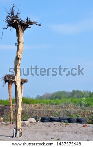 Fantastic landscape dead tree upturned with its roots upwards towards the sky on the background of blue sky.