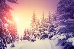 Fantastic landscape glowing by sunlight. Dramatic wintry scene. Natural park. Carpathian, Ukraine, Europe. Beauty world. Retro style filter. Instagram toning effect. Vivid violet. Happy New Year!
