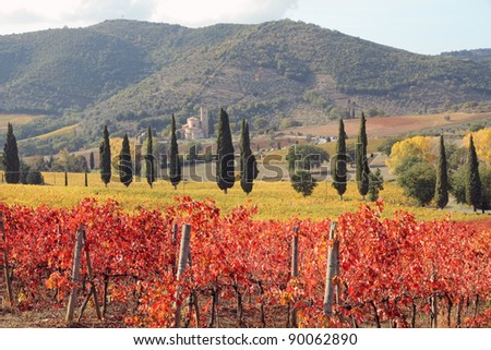 fantastic landscape of tuscan vineyards in autumn, at horizon St. Antimo Abbey ,Castelnuovo dell'Abate,region of famous red italian wine Brunello di Montalcino,  Italy, Europe