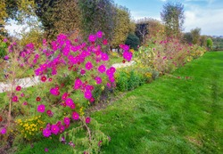 Fantastic pink flowers in Garden of plants in Paris . Autumn in France.  The photography  is similar to the paintings of the Impressionists ( postimpressionists) - Matisse, Monet, Pissarro .