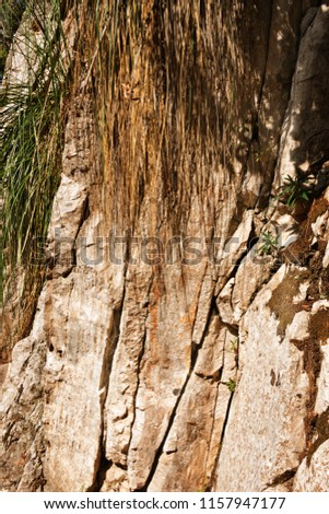 Fantastic rock mountain section , several green plants grow between the rock wall ,vertical composition , saturated colors