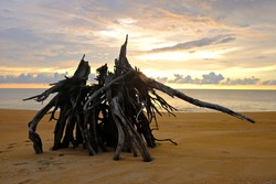 Fantastic shape of tree stump on the beach, Abstract shape texture of natural wild on the island, Nature composition concept.Using as background or natural wallpaper concept.